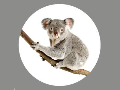 Koalablende