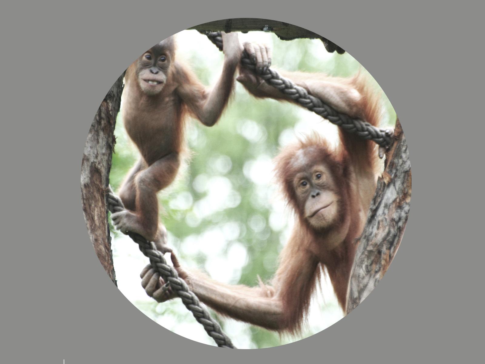 Blendermotiv Affen