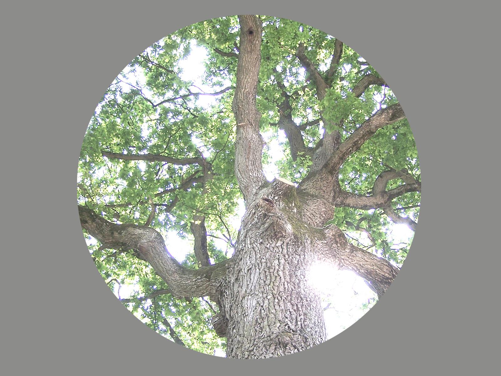Baum Blenderlampe-25