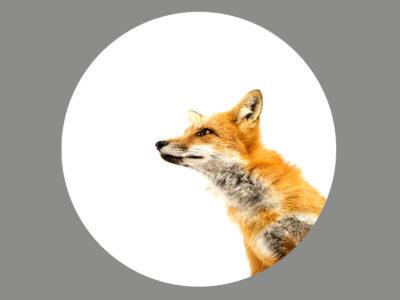 Blendermotiv Fuchs