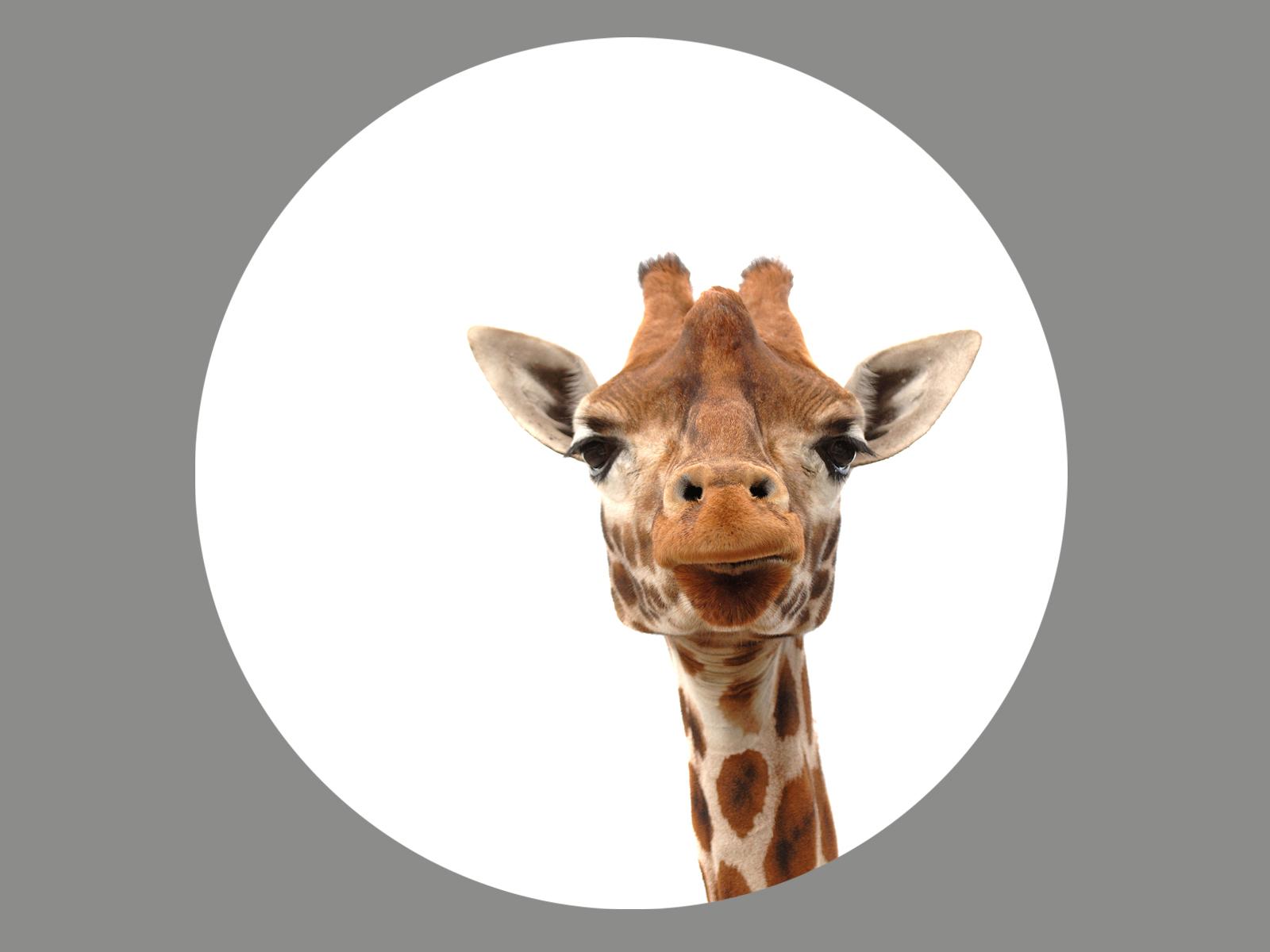 Blendermotiv Giraffe