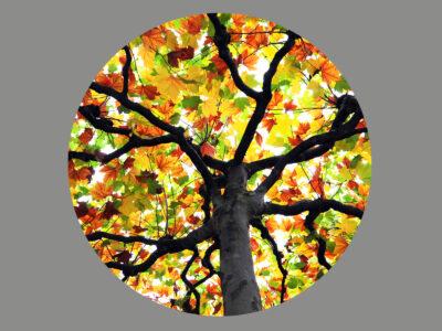 Blendermotiv Herbstbaum