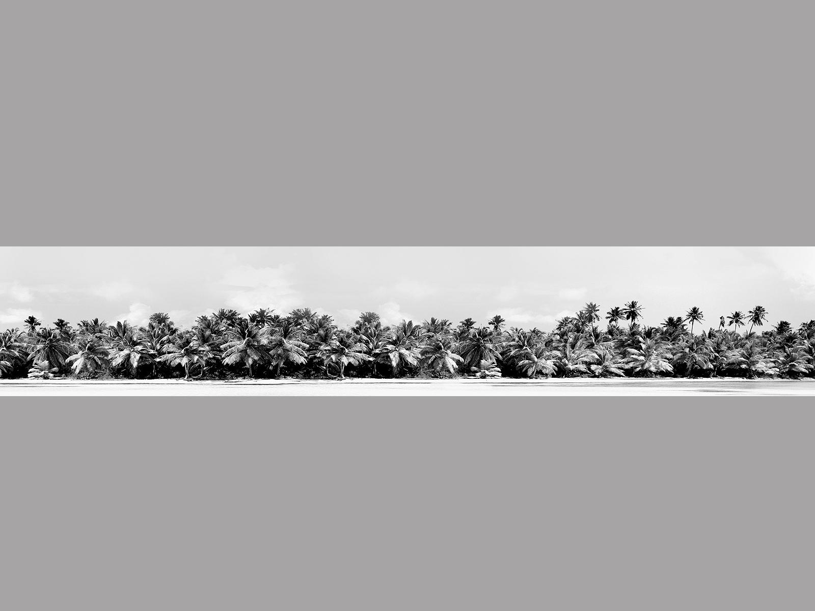 Palmenmotiv