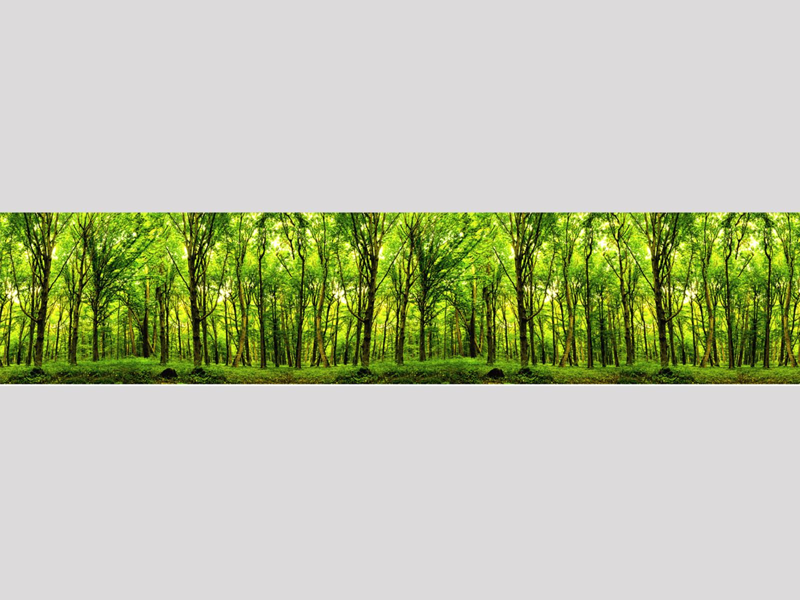Motiv Grüner Wald