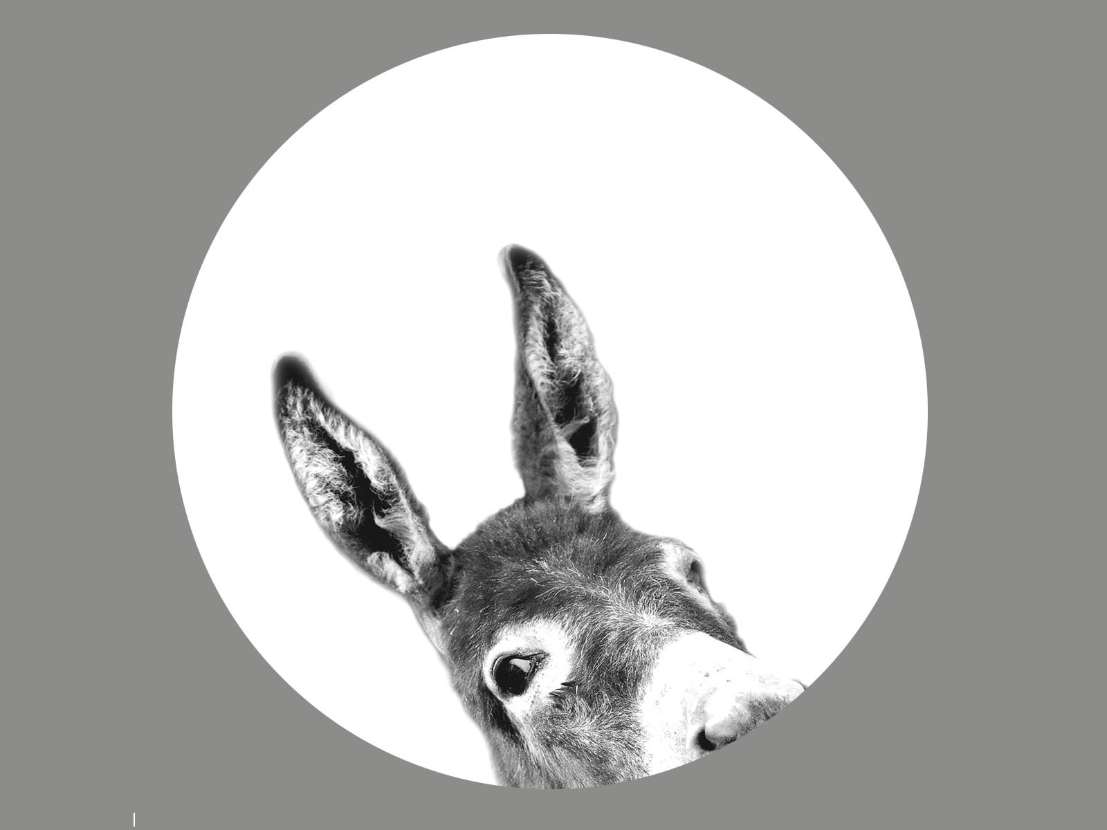 Esel Blenderlampe -380
