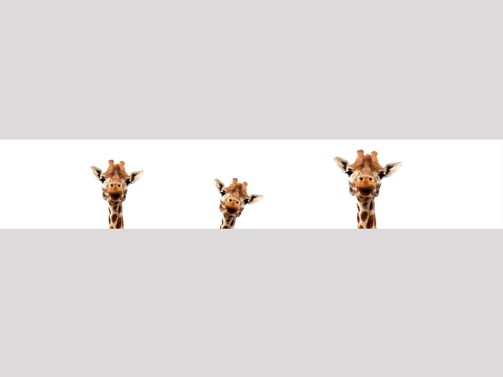 Giraffen-Inside-Motiv