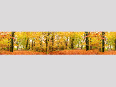 Herbstwald-Inside-Motiv
