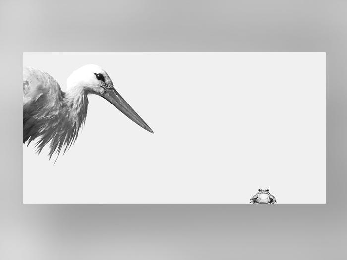 Storch & Kröte-0