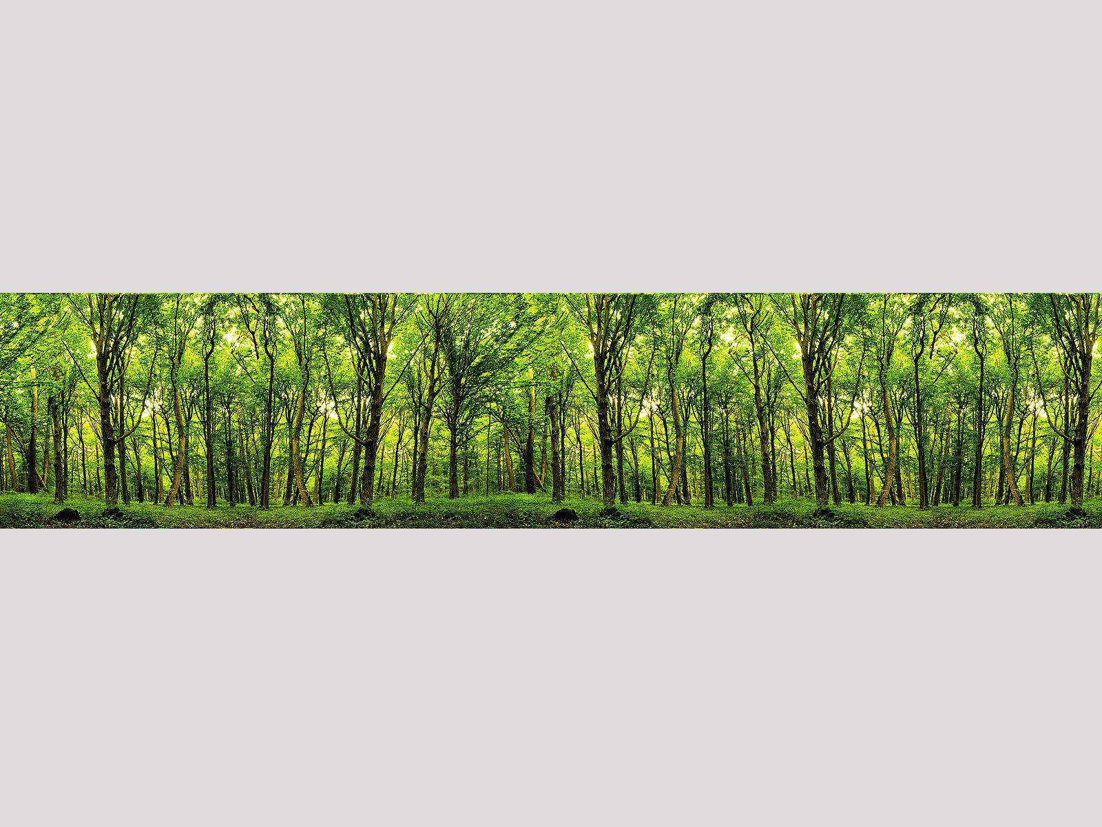 Wald-Inside Motiv